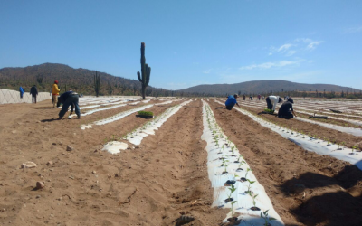 Baja Agriculture Update
