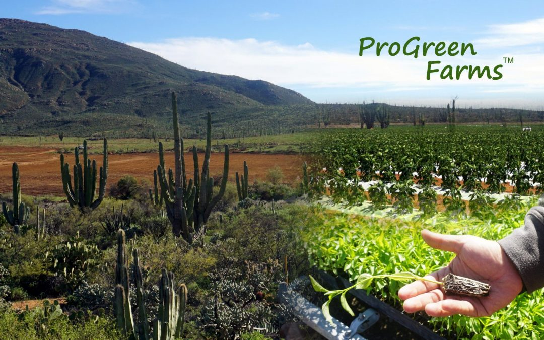 ProGreen Farms – Operations at Arenoso